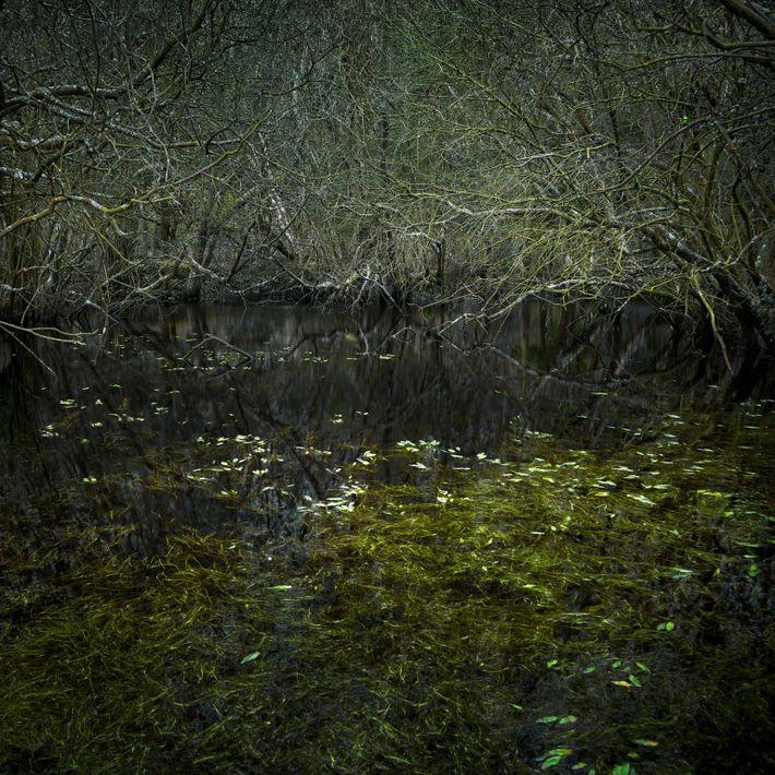 ellie-davies-forest-03