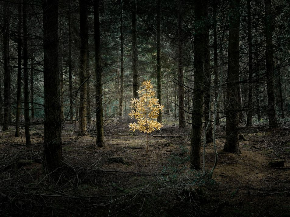 Galerie: Ein Märchenwald, in dem alles möglich ist