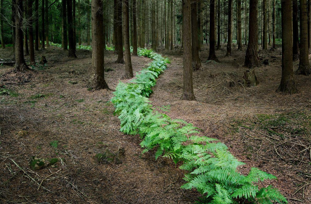 ellie-davies-forest-09