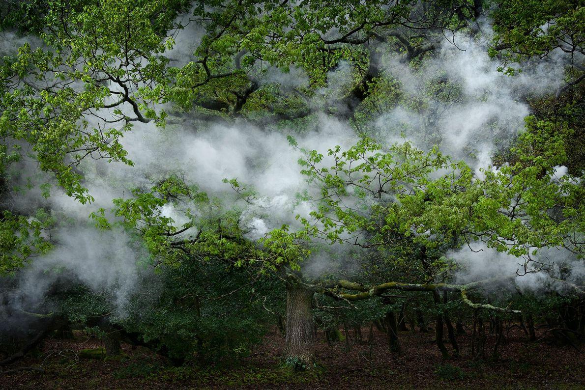 ellie-davies-forest-11