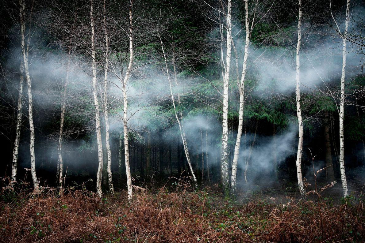Ellie-davies-forest-12