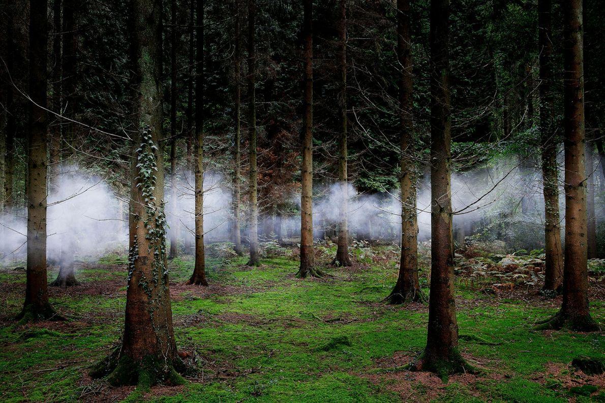 ellie-davies-forest-13.