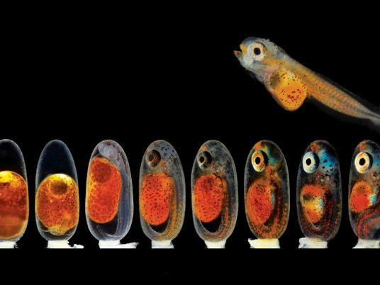 Unter dem Mikroskop: Kleine Wunder der Natur