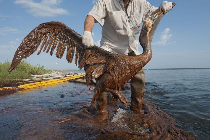 Heute ist Tag der gefährdeten Arten