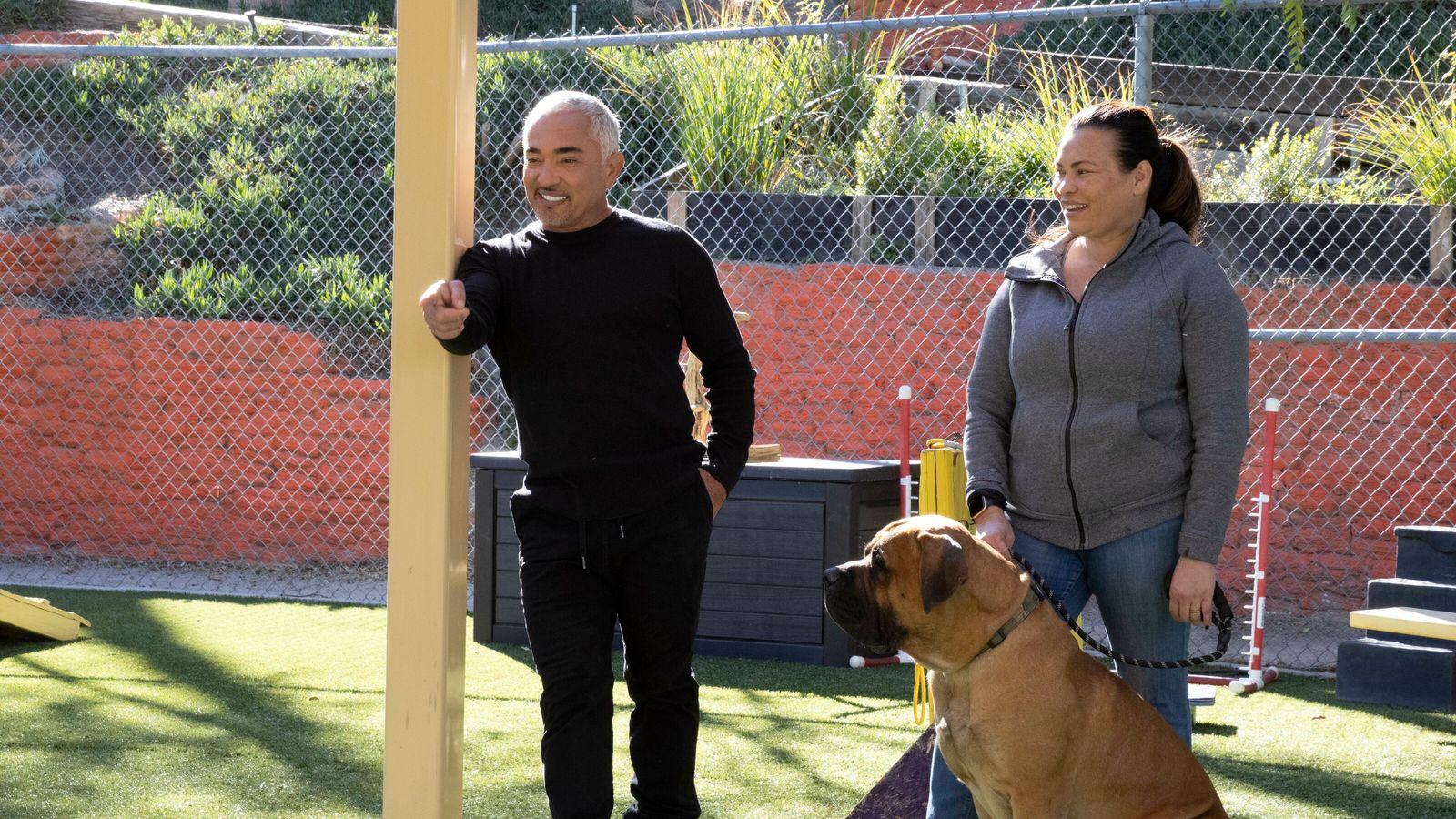 Cesar Millan - Der Hundeflüsterer im Interview