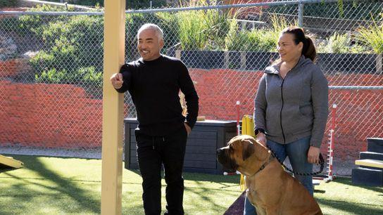 Tipps vom Experten: Cesar Millan zählt zu den bekanntesten Hundetrainern der Welt.