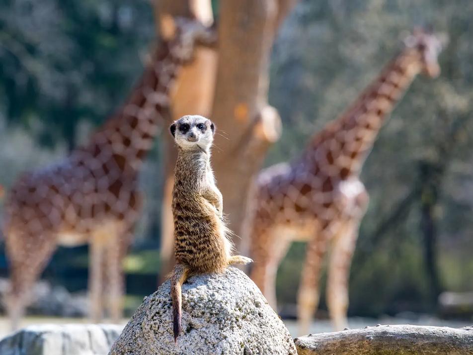 Der Besuchereffekt: Wenn sich Zootiere unbeobachtet fühlen