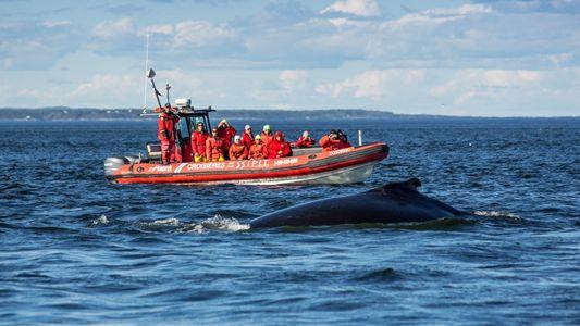 Galerie: Roadtrip durch Québec: Auf der Whale Route durch die Wildnis