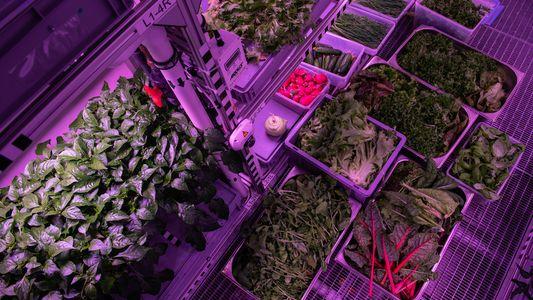 Deutsche Forscher züchten in Antarktis Pflanzen für den Mars