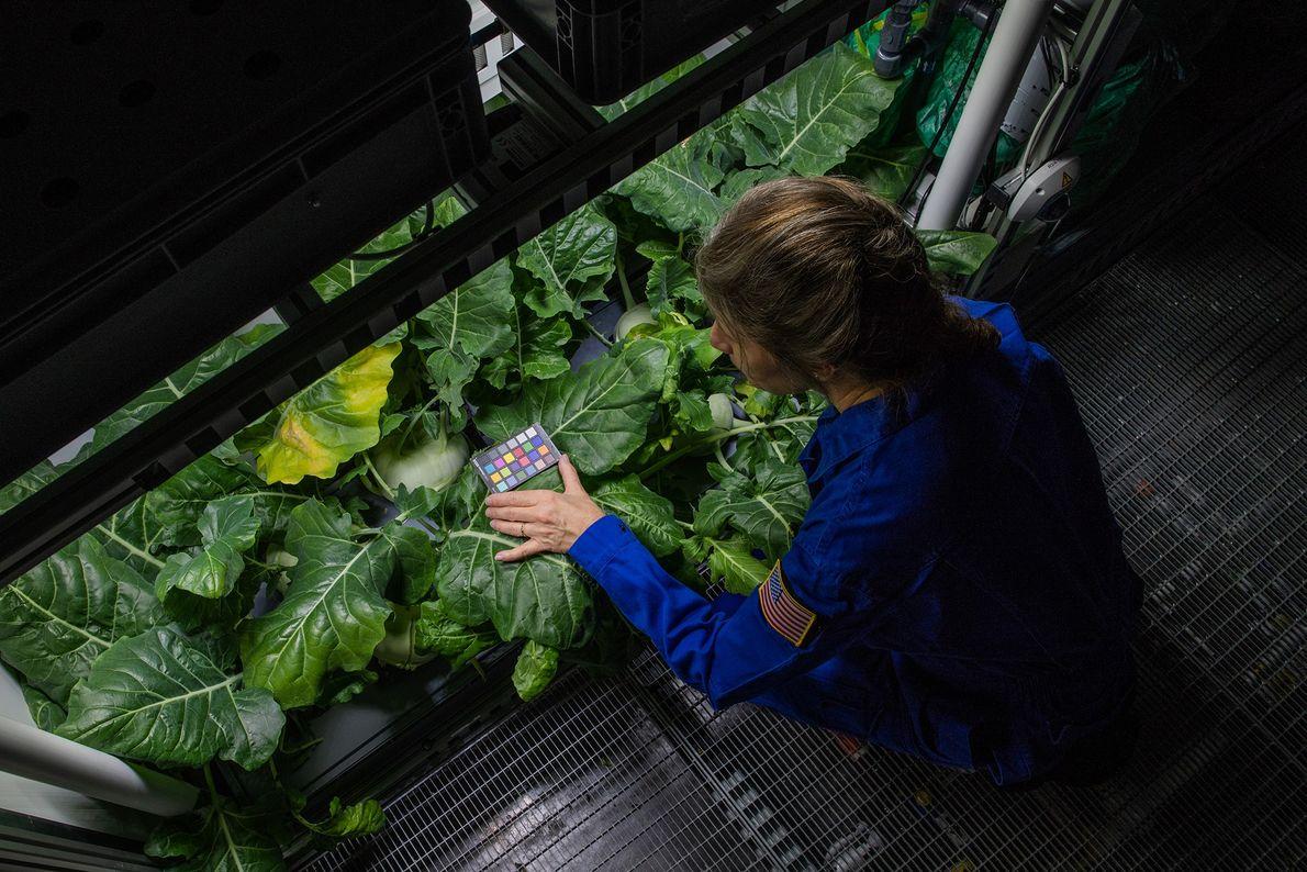 Manchmal besuchen Wissenschaftler aus anderen Ländern die Neumayer-Station – zum Beispiel Anna-Lisa Paul von der University ...