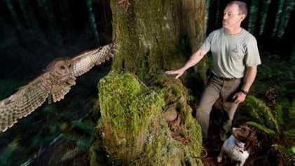 Galerie: Redwoods: Die roten Riesen