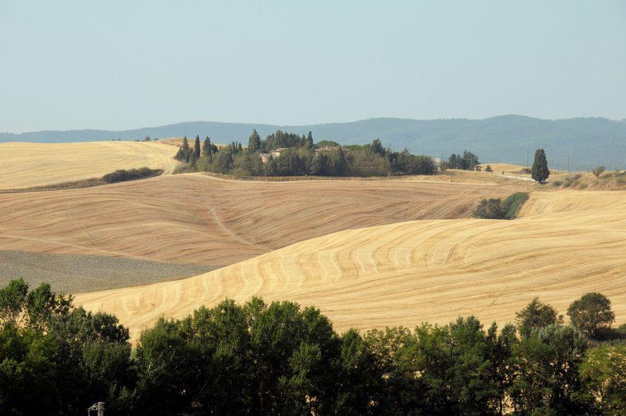 Auf der Pilgerreise nach Buonconvento wartet die unverwechselbare Landschaft der Toskana auf die Wanderer.