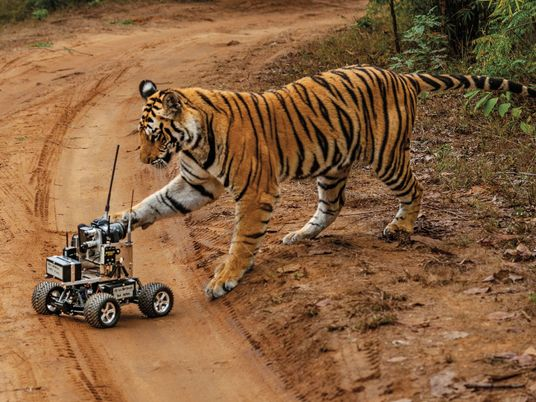 Galerie: Bitte lächeln: Der perfekte Tiger-Schnappschuss