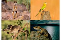 Tiere mit erhöhtem Aussterberisiko