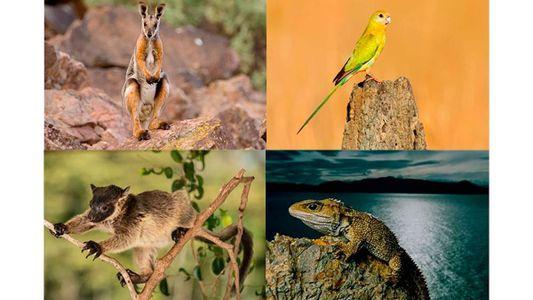 Welche Tiere  aufgrund des Klimawandels wahrscheinlich zuerst aussterben