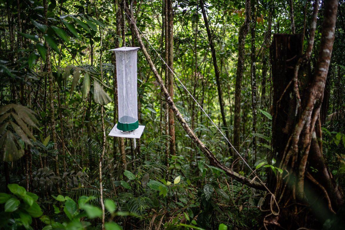 Solche Fallen nutzen die Wissenschaftler, um für ihre Studie Schmetterlinge zu fangen.