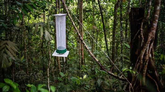 """Galerie 2: Erste Expeditionen Kolumbiens """"Biodiversitätswunder"""""""