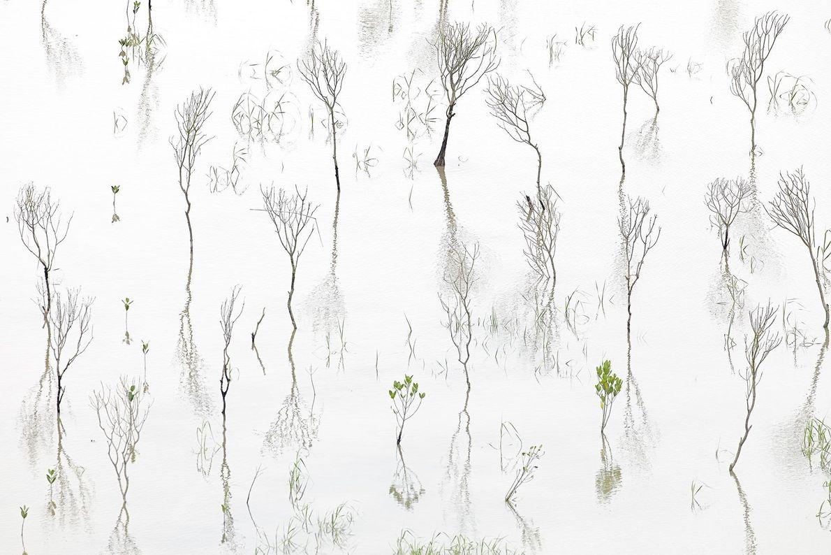 Mangrovenwald