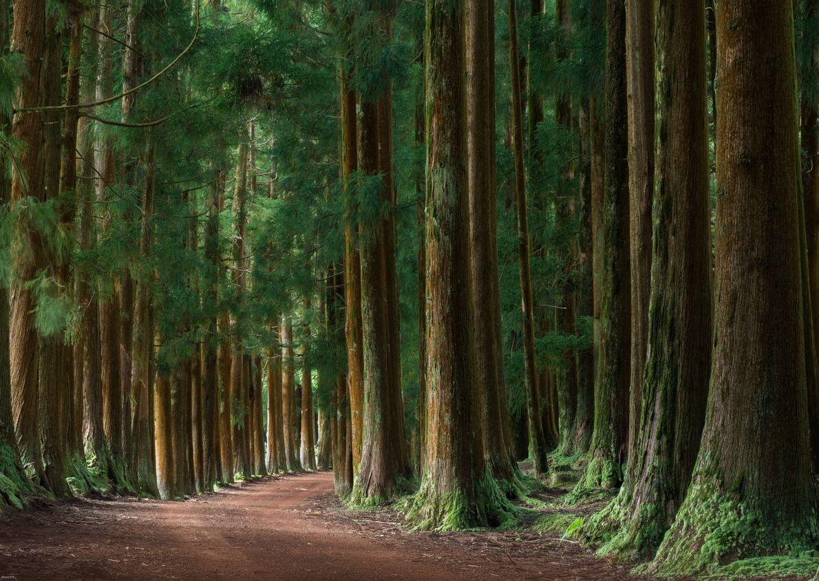 Stiller Wald