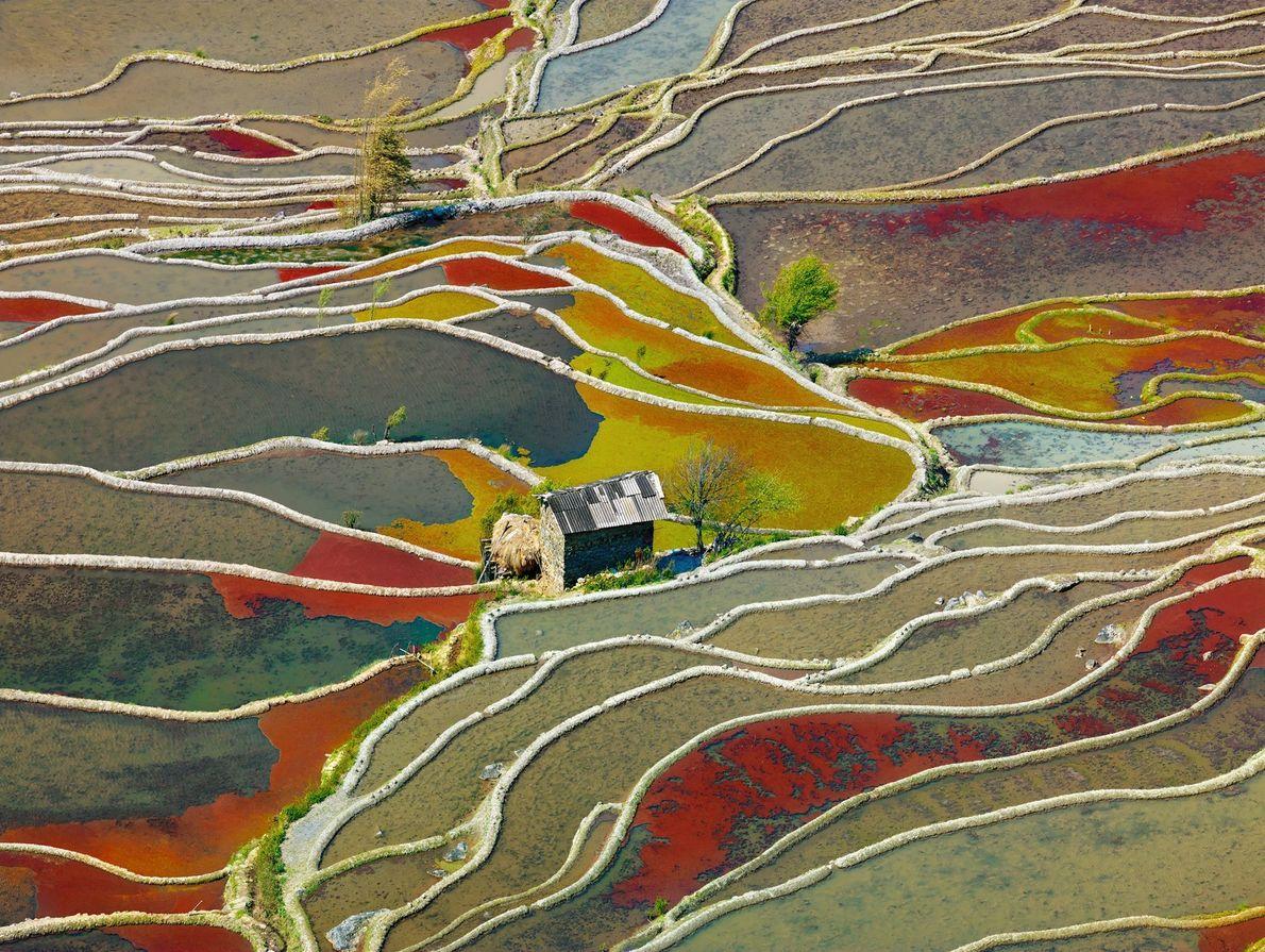Farbenfrohe Felder