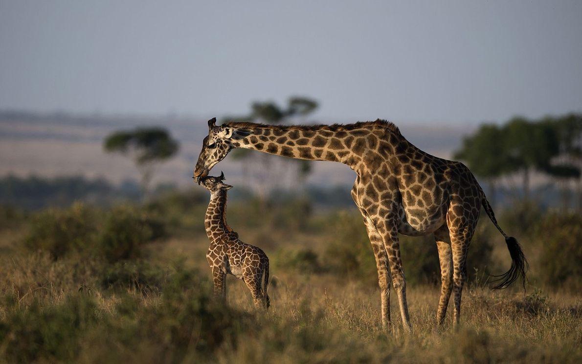 Liebende Mutter