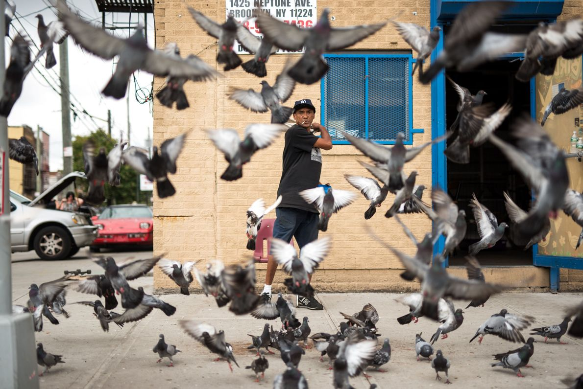 Für die Vögel