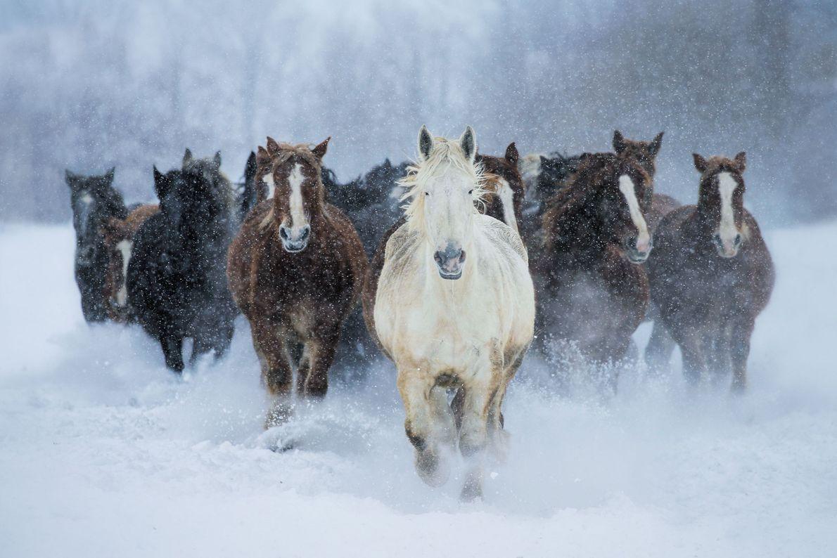 Durch den Schnee