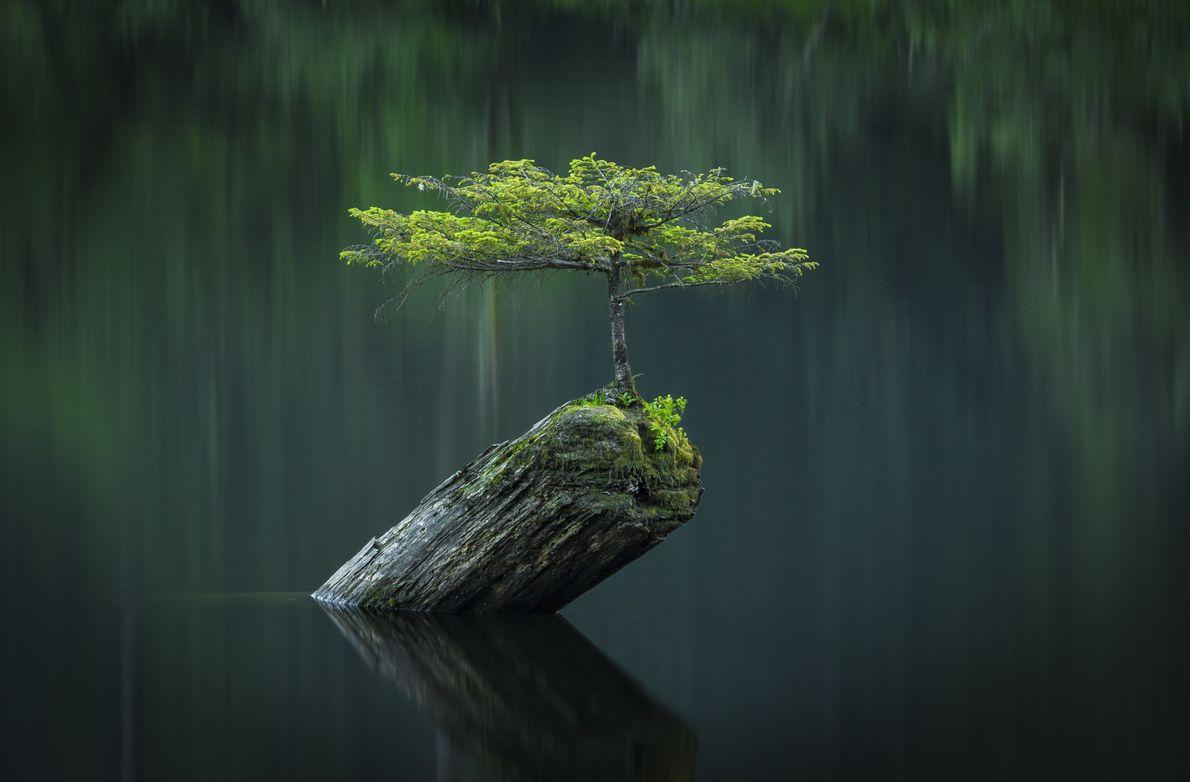 Baum in einem Fluss