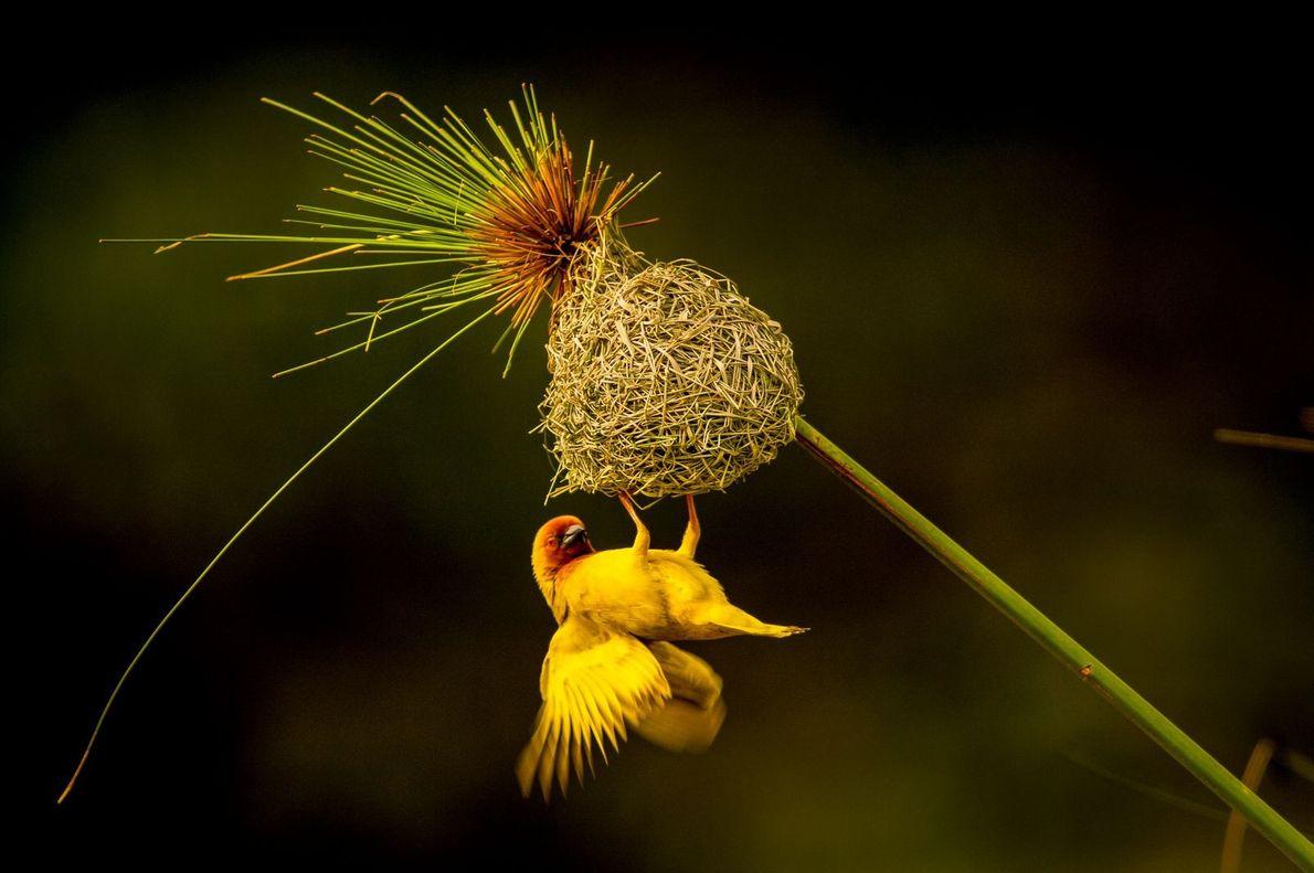 Das beste Nest
