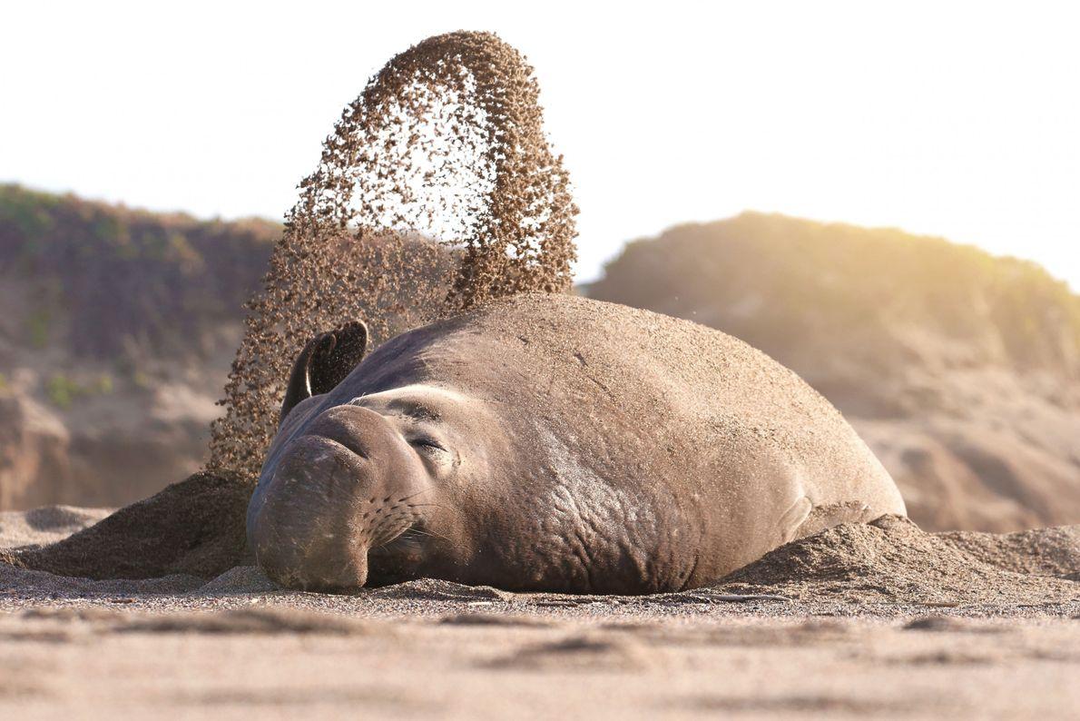 Sonnenschutz aus Sand