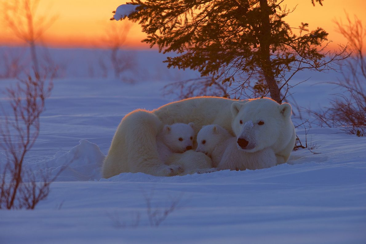 Mütterliche Wärme