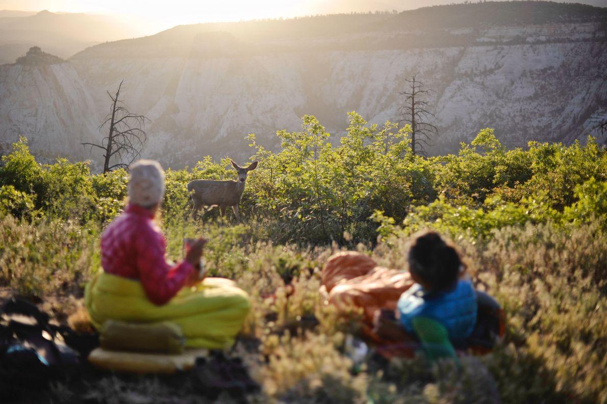 Camper und eine Hirschkuh im Zion-Nationalpark