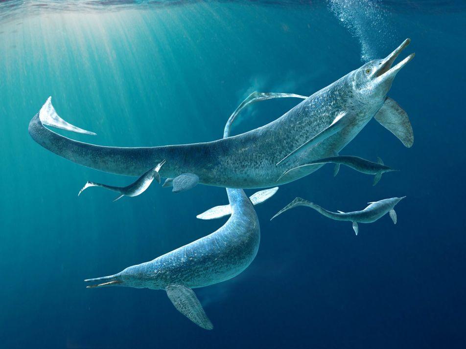 Meeresreptil-Fossil mit 4 m langer Beute im Magen verblüfft Forscher