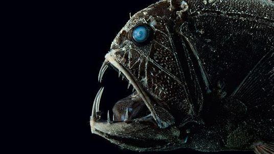 Bizarre Welt der Tiefsee