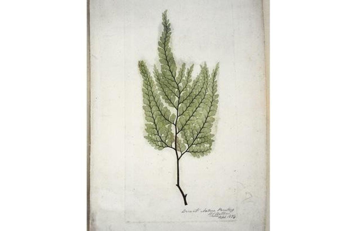 In prähistorischen Zeiten waren die Wälder von mächtigen Farnwedeln gekrönt. Auch heute noch könnten einige Farne …