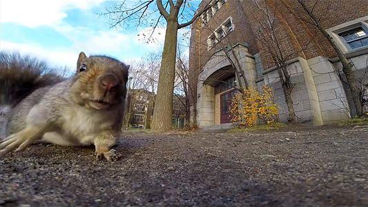 Warum zuckt der Eichhörnchenschwanz?