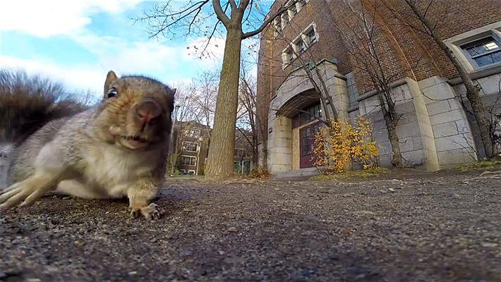 Das Treiben der Eichhörnchen