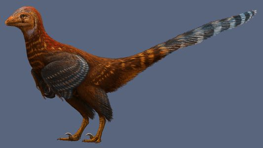 Neuer vogelartiger Dinosaurier hatte moderne Federn