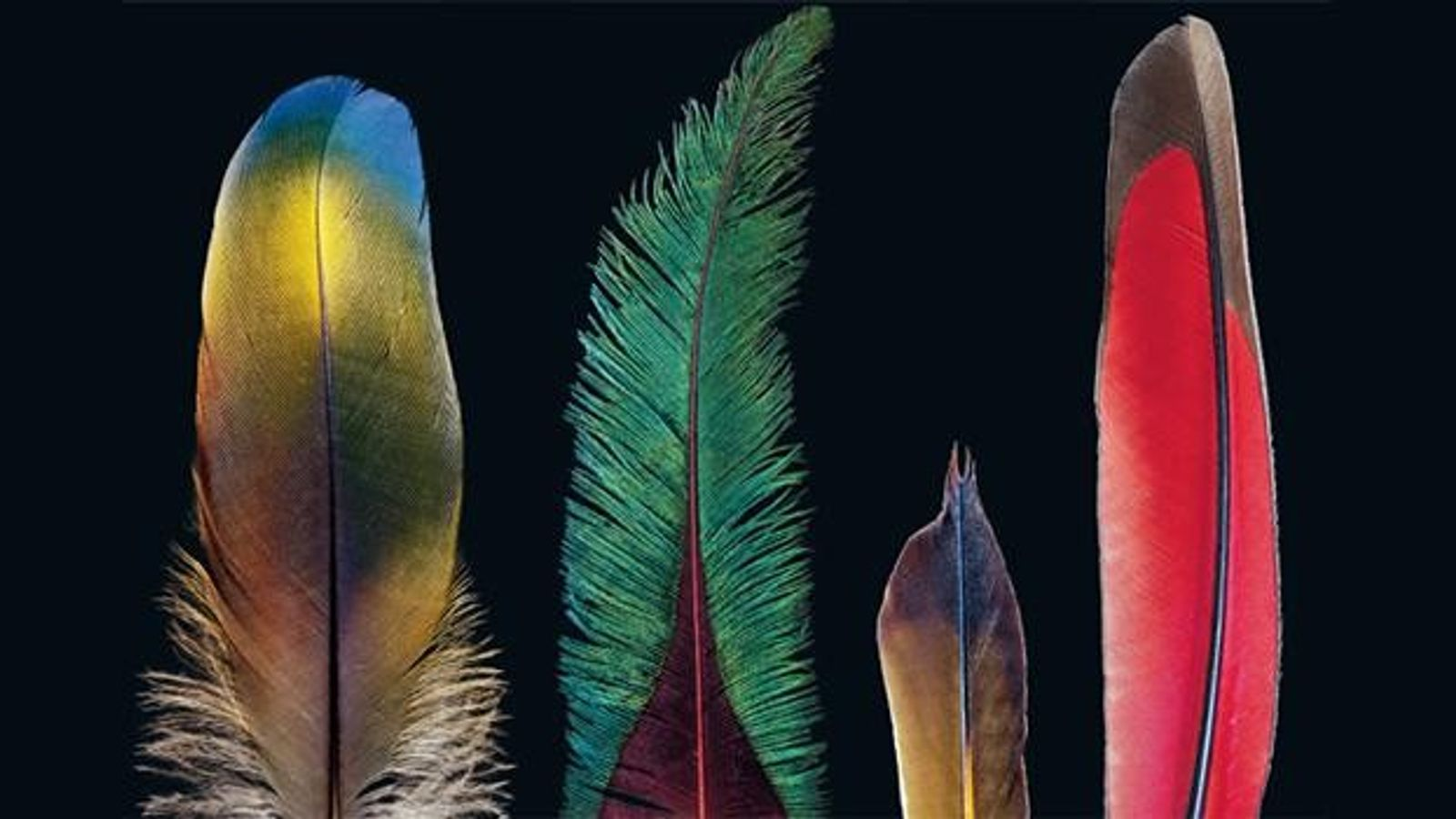 Ein Wunder der Evolution: Wie die Natur die Feder erfand