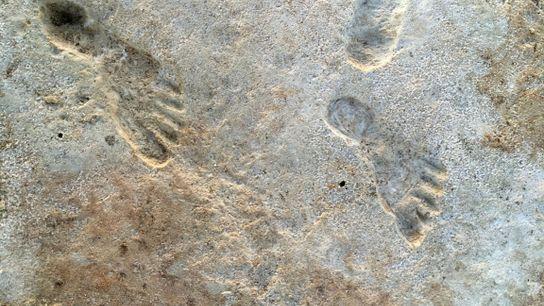 Wissenschaftler haben im White-Sands-Nationalpark mehrere menschliche Fußabdrücke entdeckt.