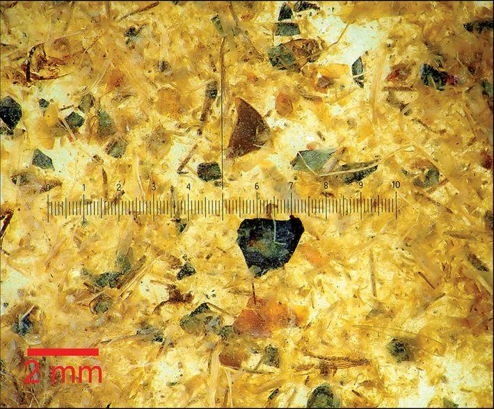 Mikroskopische Ansicht des Mageninhalts des Tollund-Mannes.