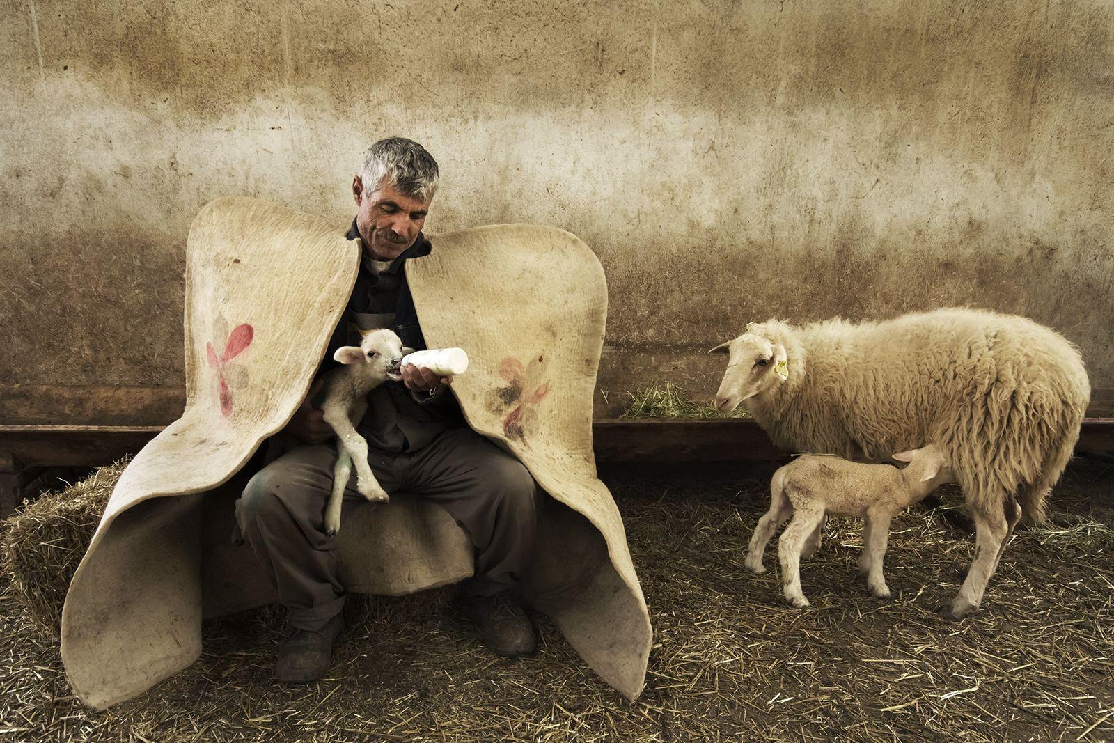 Der Schäfer und das Lamm