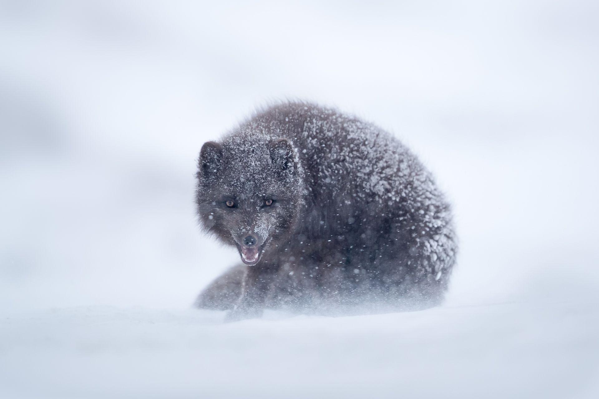 Fuchs und Eis