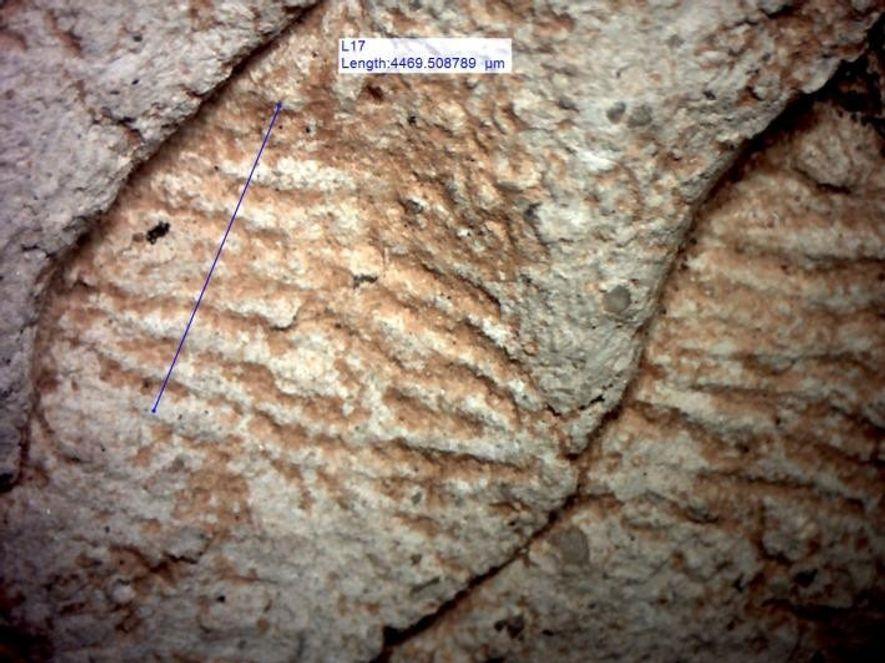 Forscher analysierten die Abstände zwischen den Papillarlinien der Fingerabdrücke, die auf den Keramikerzeugnissen gefunden wurden. Bei ...