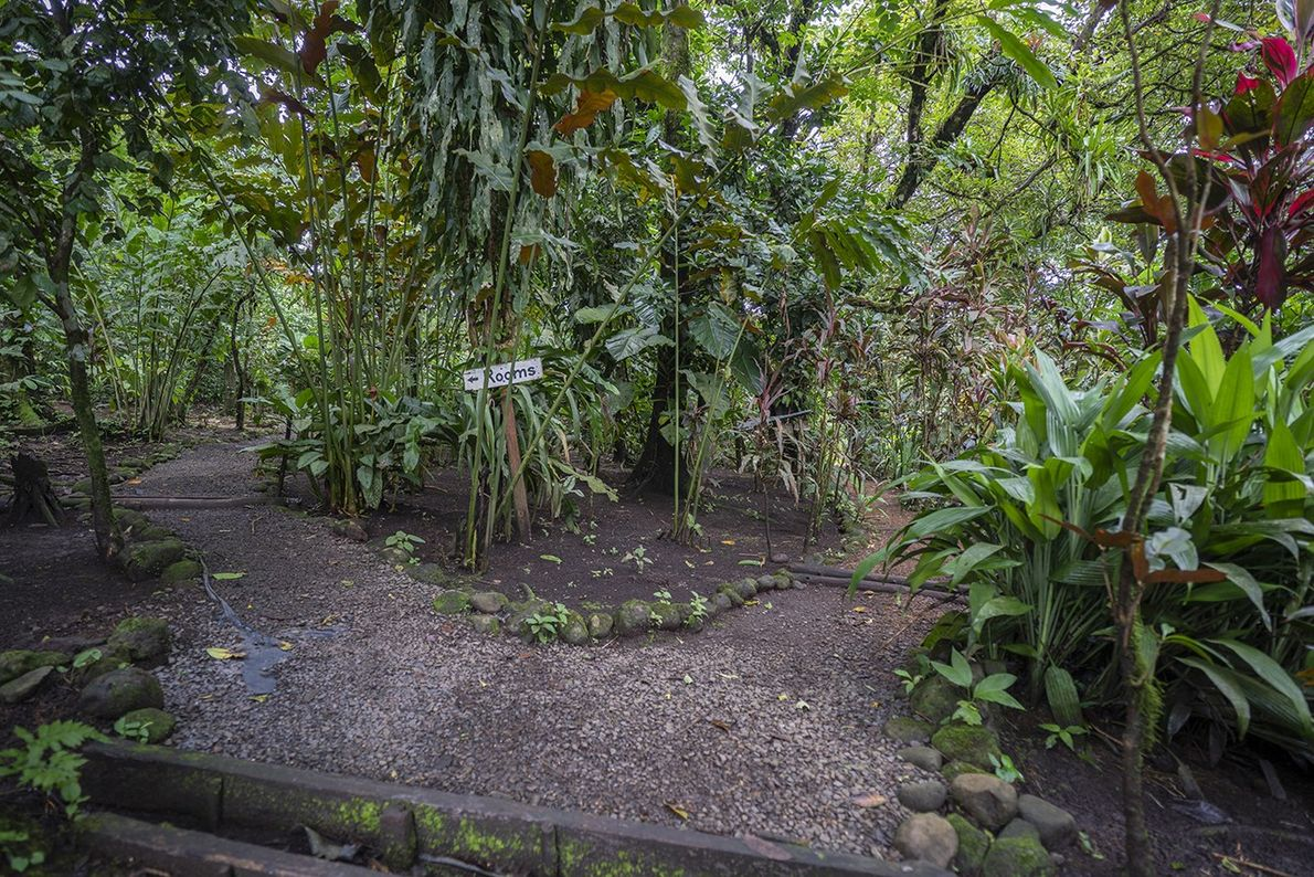 Die Pfade rund um die Finka Verde sind natürlich angelegt. Um die Tiere nicht zu stören, ...