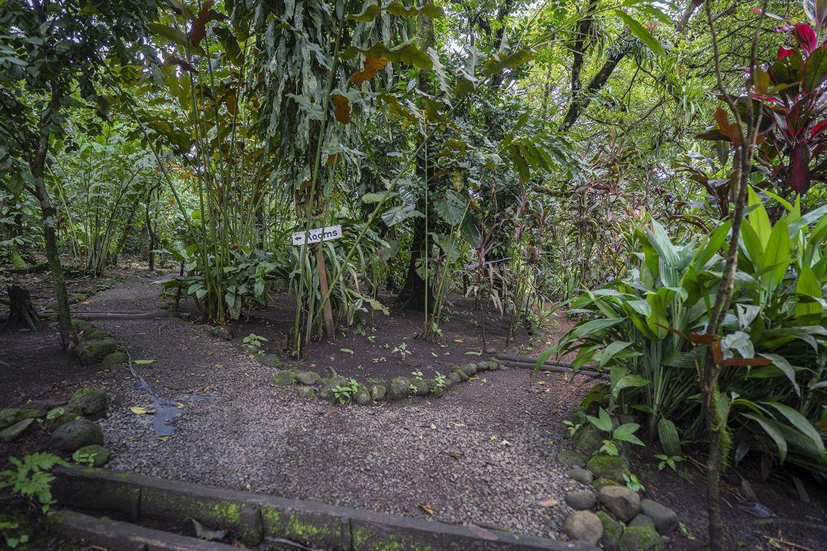 Die Pfade rund um die Finka Verde sind natürlich angelegt. Um die Tiere nicht zu stören, …