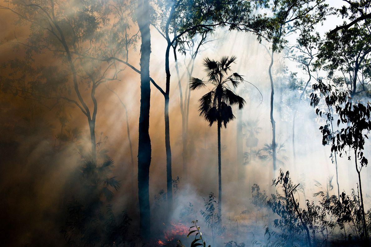 Ein kontrollierter Waldbrand lodert auf Melville Island. Mit dieser Methode sollen gewaltige Brände während der Trockenzeit ...