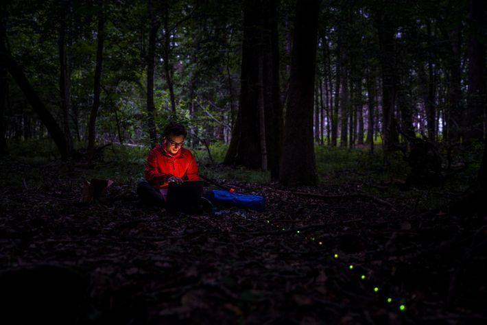 Raphael Sarfati, ein Physiker und Forscher an der UC-Boulder, stellt eine Reihe von LED-Leuchten auf, um ...