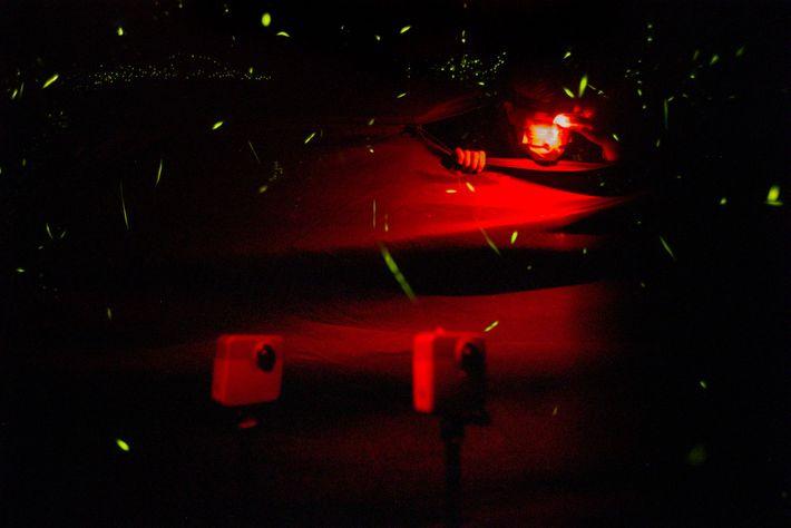 Um eine kontrollierte Umgebung für die Untersuchung der Bewegungen und Lichtmuster von Photuris frontalis zu schaffen, ...