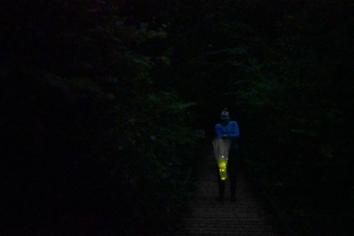 Julie Hayes catches Photuris frontalis fireflies in Congaree. The team then placed them in a temporary ...